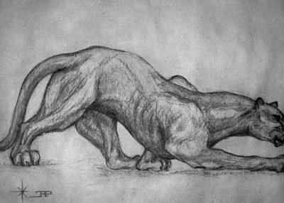 dessin au fusain d'une panthère en noir et blanc
